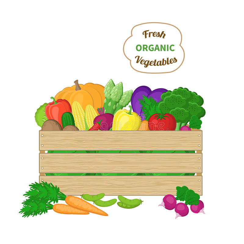 Harvest in a wooden box. Crate with autumn vegetables. Fresh Organic food from the farm. Vector colorful illustration of the stock illustration