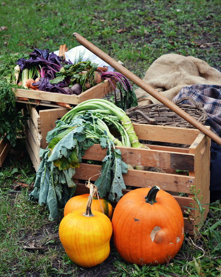 Harvest. Wooden crates filled with food items from the garden including pumpkins, squash, broccoli, brussel sprouts, beets, carrots, swiss chard, parsley, etc stock photos