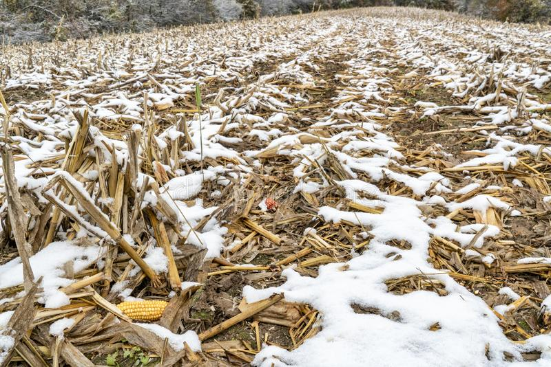 Harvested corn field in fall scenery royalty free stock photography