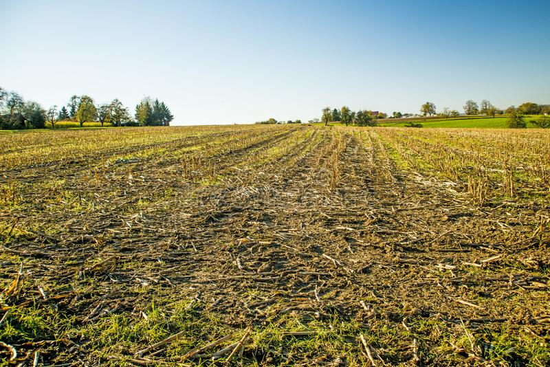Harvested corn field in Germany royalty free stock images
