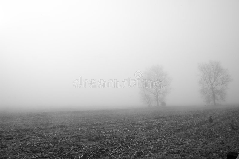Harvested Cornfield in Fog royalty free stock images