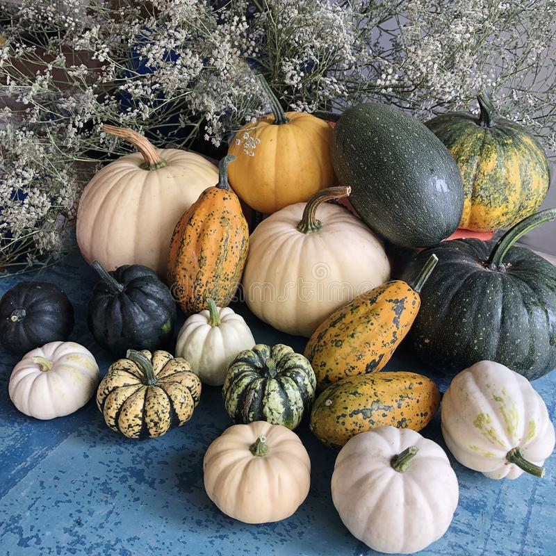 Harvested different varieties of flowering forms of pumpkin shapes. stock image