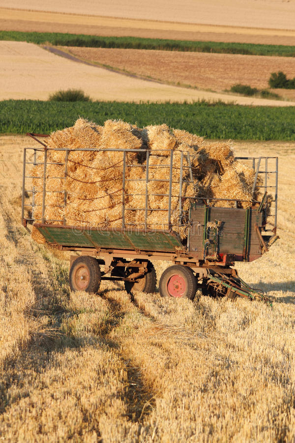 Harvested field royalty free stock images