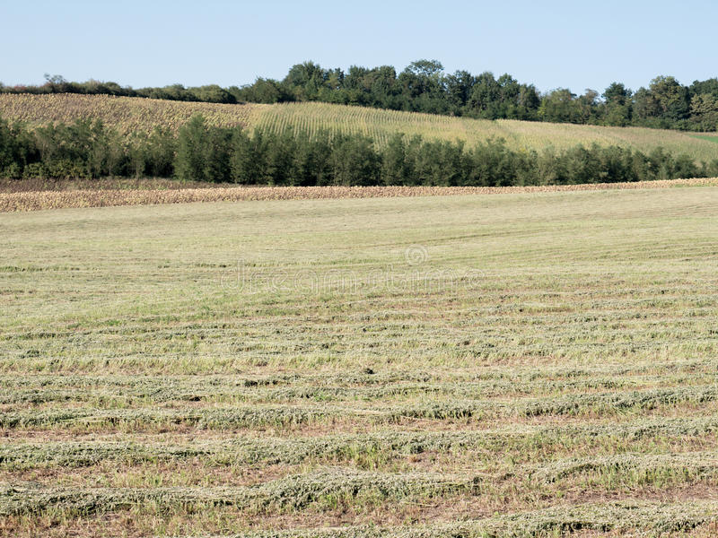 Harvested field. Photography of a harvested field from the end of the summer. The photography has been taken in August 2016. Additional RAW file available for royalty free stock images