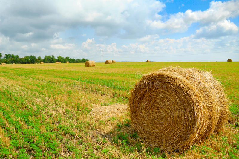 Harvested Field with Round Straw Bales royalty free stock image
