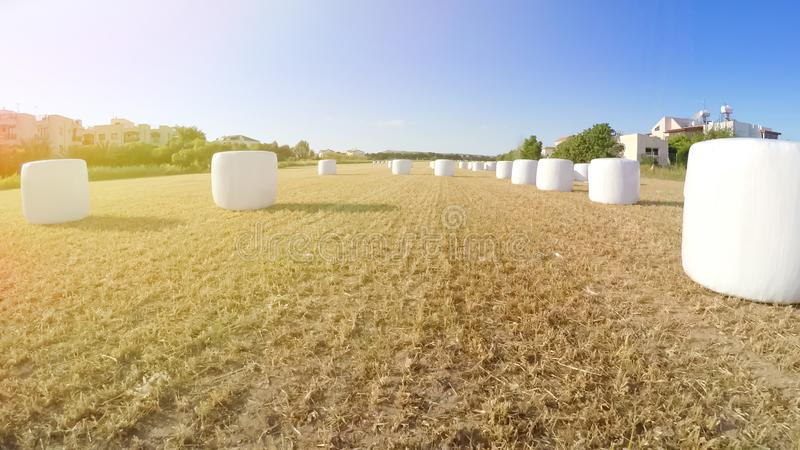 Harvested field with straw bales in rural area, agriculture, beautiful view royalty free stock image
