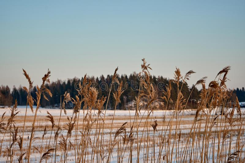 A harvested field under snow. royalty free stock photos