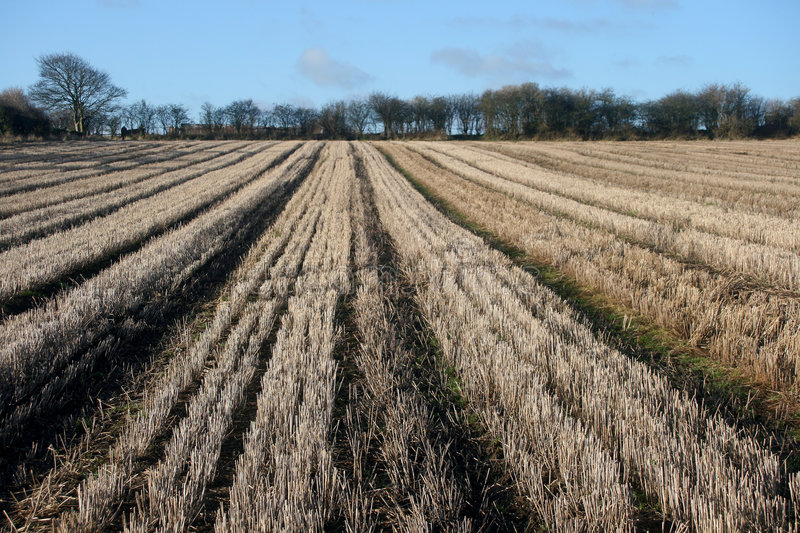 Harvested Field In Winter Royalty Free Stock Photography