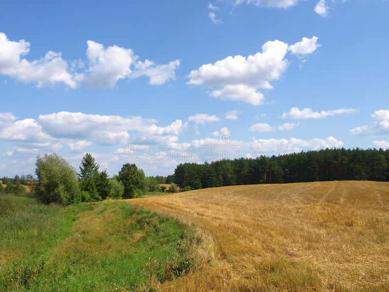 Harvested grain field and meadow royalty free stock image