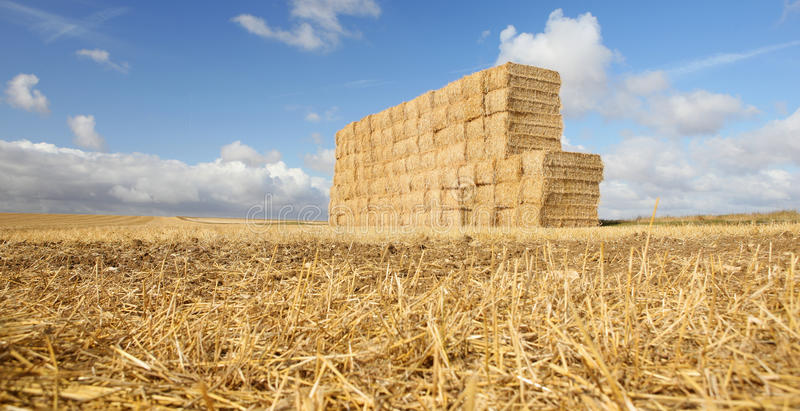 Harvested Hay Field royalty free stock image