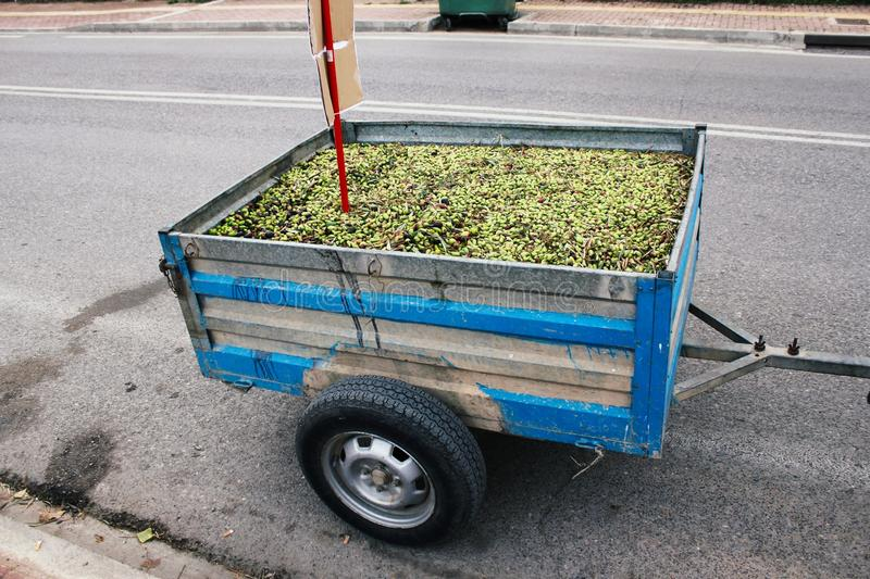 Harvested olives on a farm truck trailer. In Attica, Greece stock photos