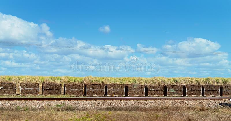 Harvested Sugar Cane In Bins Ready For The Mill. Harvested sugar cane in bins ready for transporting by rail to a refinery stock photo