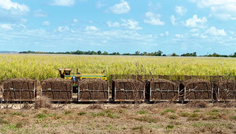 Harvested Sugar Cane In Bins Ready For The Mill. Harvested sugar cane in bins ready for transporting by rail to a refinery stock images