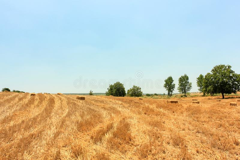 Harvested wheat field in Turkey stock images