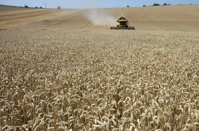 Harvester. Summer harvest on field in Czech republic stock photos