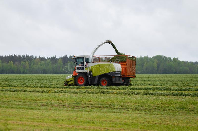 Harvester collects dry grass to the truck in a field full of green grass. Truck collects grass clippings, which cuts the tractor driving by on the green field stock photos