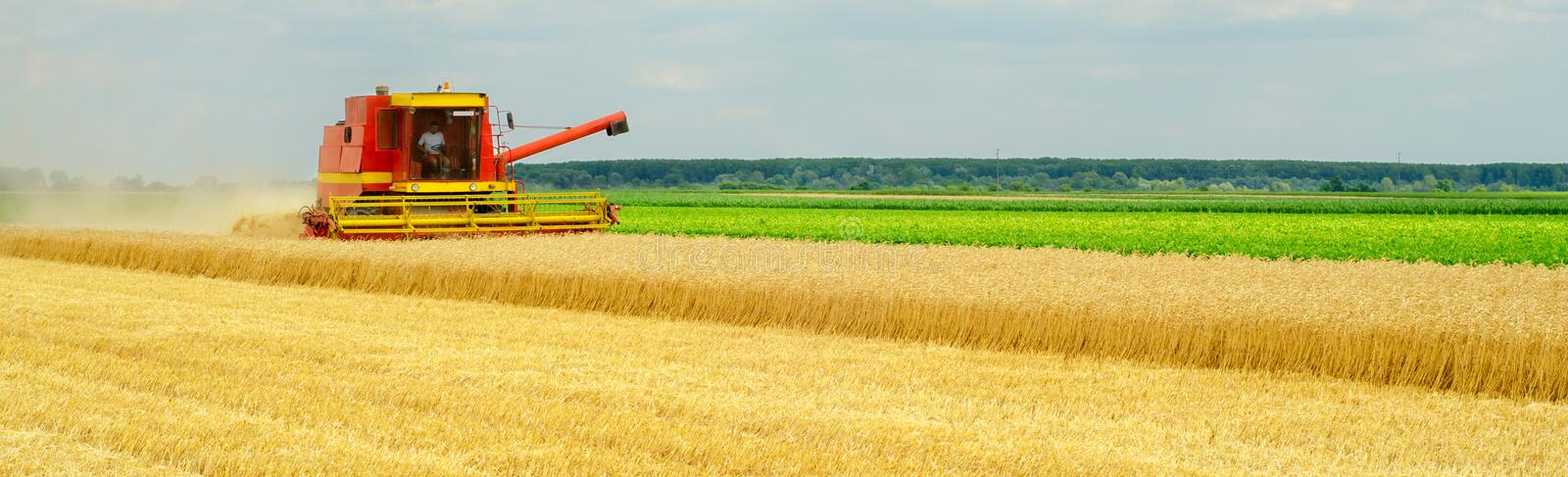 Harvester combine harvesting wheat in summer. Harvester combine harvesting wheat on cloudy summer day royalty free stock photography