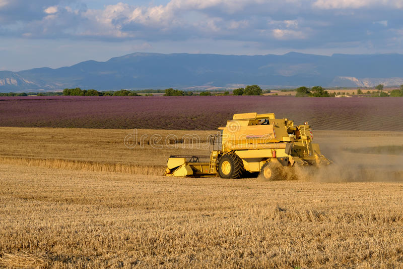 Harvester gathers the wheat crop. In a field stock images