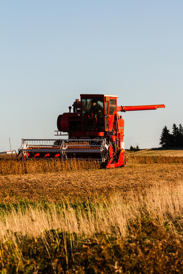 Harvester. A Harvester harvests a grain field or Cornela field royalty free stock images