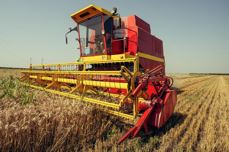 Harvester harvests wheat on field. On the blue sky stock photography