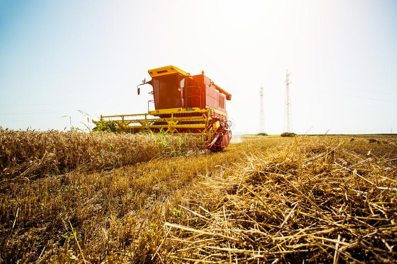 Harvester harvests wheat on field. On the blue sky stock photo