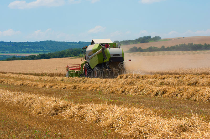 Harvester machine to harvest wheat field working. Agriculture stock photo