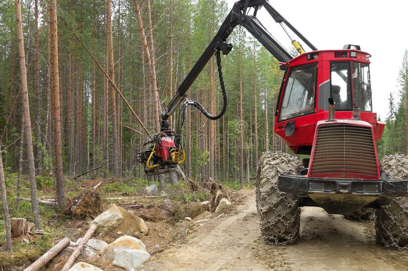 Harvester machine working in a forest, chopping a young pine tree. Wood industry. Northern Karelia, Russia royalty free stock photography