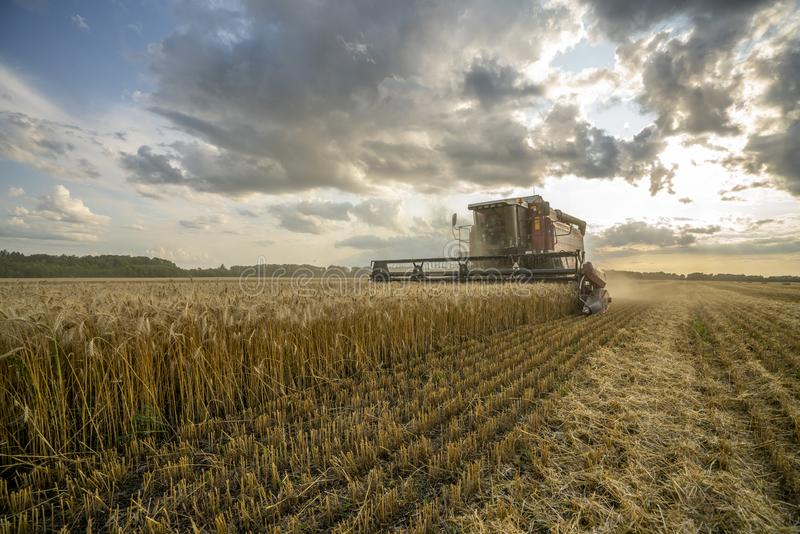 Harvester removes wheat field on the background of the sunset cloudy sky royalty free stock photography