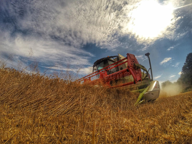 Harvester at work in summer sun stock images