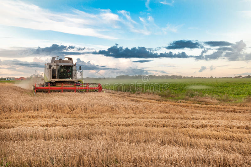 Harvester is working in the field during harvester time royalty free stock photography