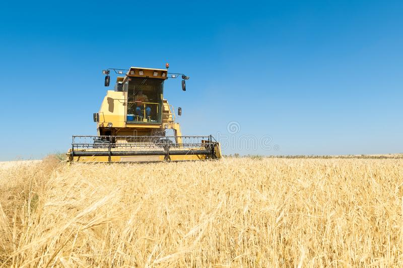 Harvester working in the field on sunny day with blue sky. Agricultural machinery working on the Barley tour with Sunny day royalty free stock photo