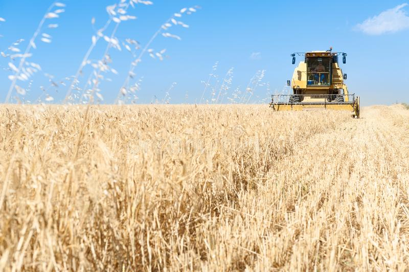 Harvester working in the field on sunny day with blue sky. Agricultural machinery working on the Barley tour with Sunny day royalty free stock photos