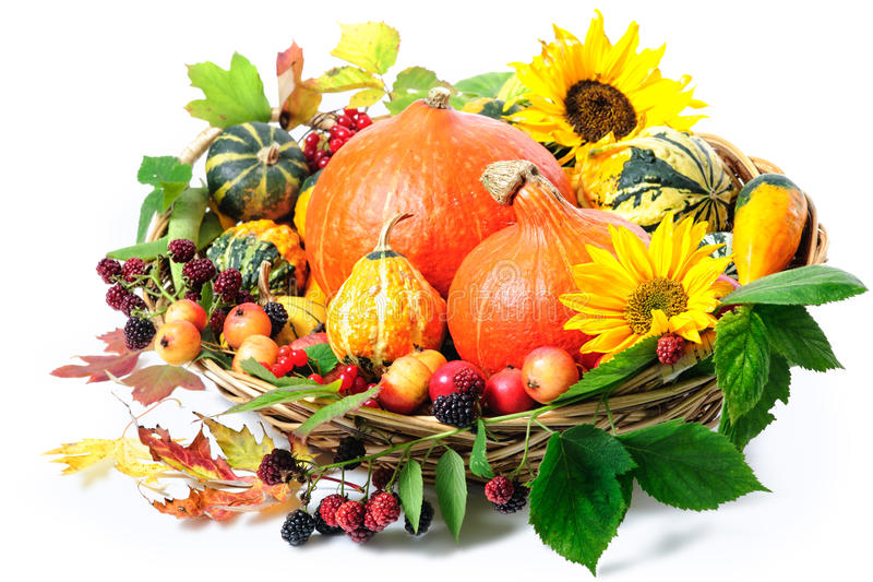 Download Harvesting Arrangement Of Pumpkins Stock Photo - Image of fruit, fall: 34545182
