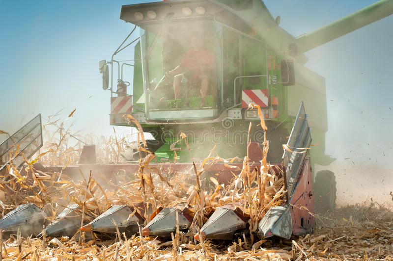 Download Harvesting corn stock image. Image of working, plant - 26580417