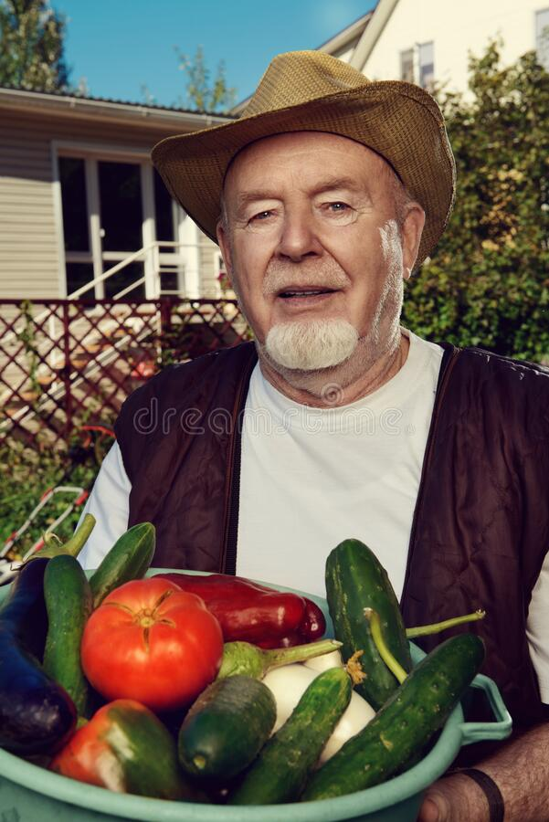 Harvesting in the country royalty free stock photography