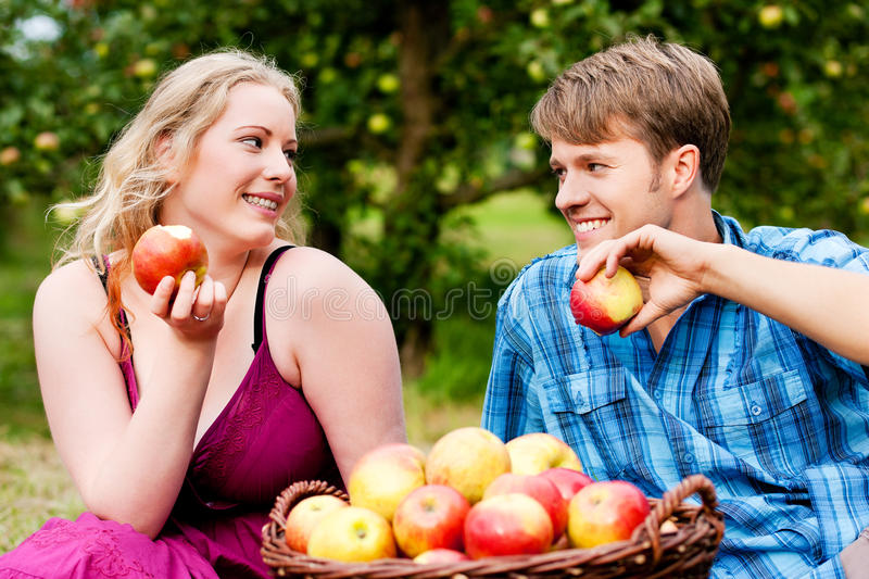 Harvesting - eating apples. Couple (man and woman) eating freshly harvested apples - in front of them a basket with lots of fresh fruit stock photo