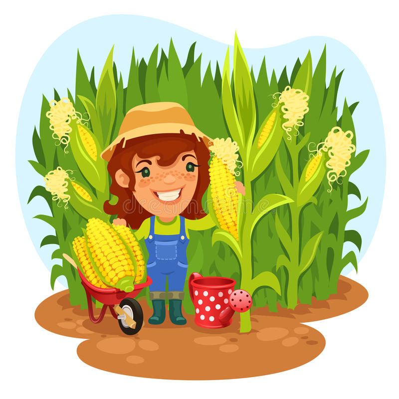 Harvesting Female Farmer In a Cornfield. In the EPS file, each element is grouped separately. Clipping paths included in additional jpg format royalty free illustration