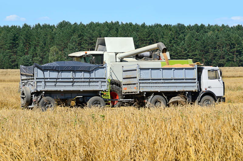 Harvesting in a field stock photography
