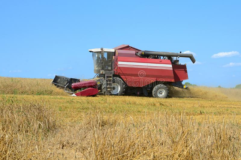 Harvesting in a field royalty free stock photography