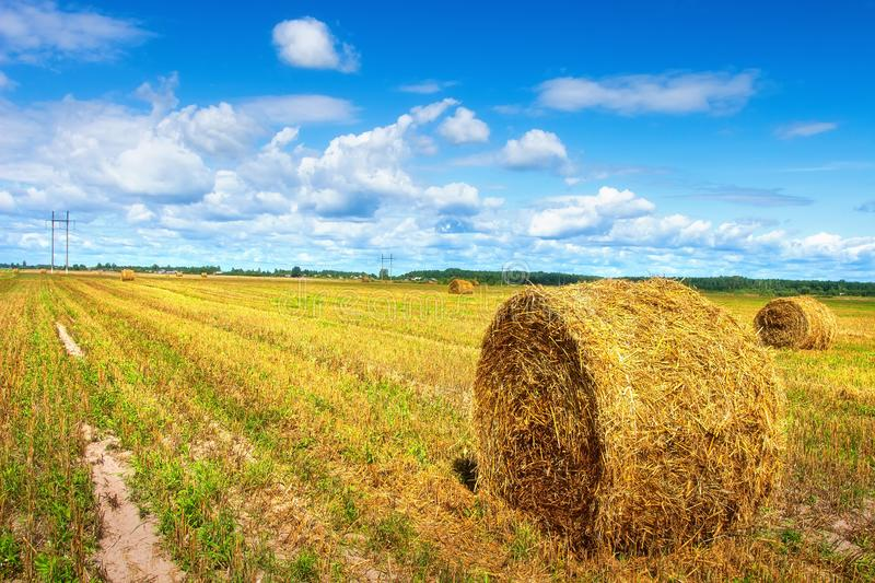 Harvesting field with straw bales on sunny bright day with clouds in blue sky. Agriculture landscape. Harvest time stock images