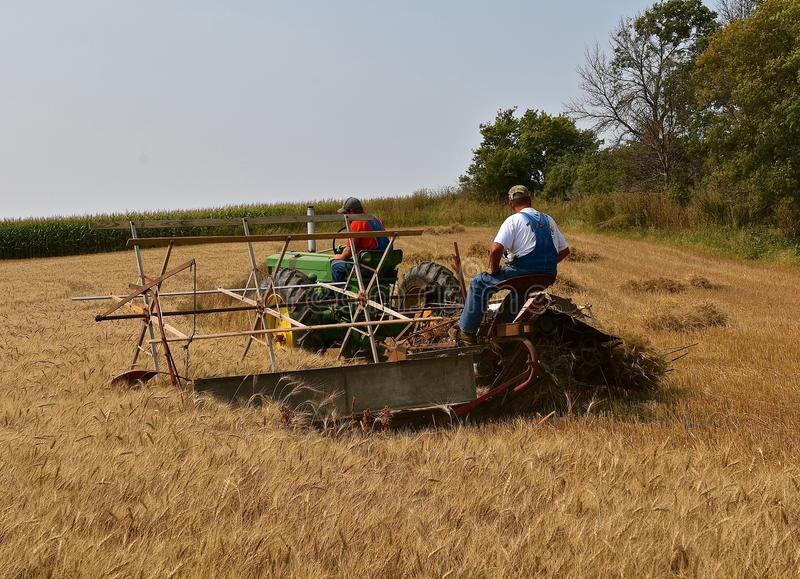 Harvesting grain with an old binder. ROLLAG, MINNESOTA, Sept 2, 2017: Unidentified operators of a John Deere 60 tractor a grain binder are field demonstrating at stock images