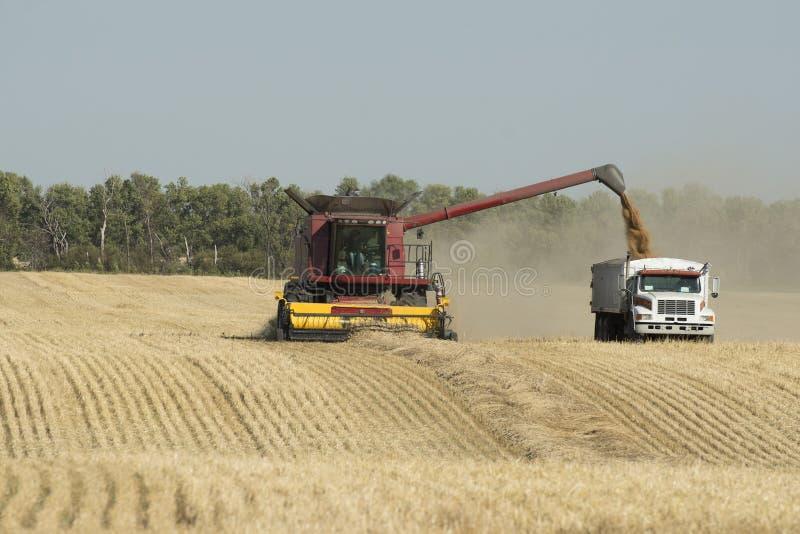 Harvesting Grain stock photo