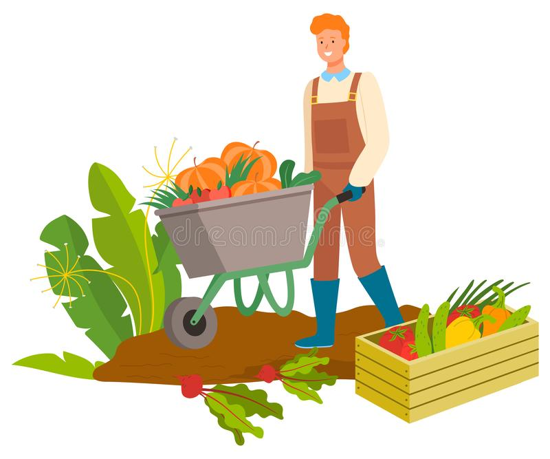 Harvesting Man with Carriage, Carrots Plantation. Plantation of carrots and beetroots vector, harvesting man with carriage. Wooden box with pepper and cabbage vector illustration