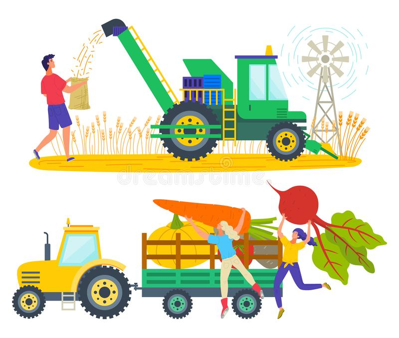 Harvesting People on Field Tractor with Vegetables. Man working on wheat field vector, character loading truck with products. Carrots and beetroots in carriage vector illustration