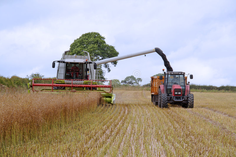 Download Harvesting the seed field stock image. Image of northumberland - 2960411