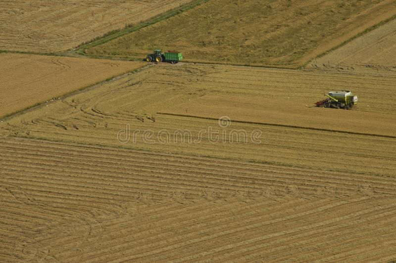 Harvester and tractor harvesting rice fields. Harvesting rice fields in a sunny day o summer. Valencia, Spain stock image