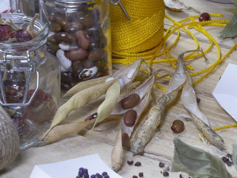 Harvesting and saving heritage and heirloom seeds stock photo