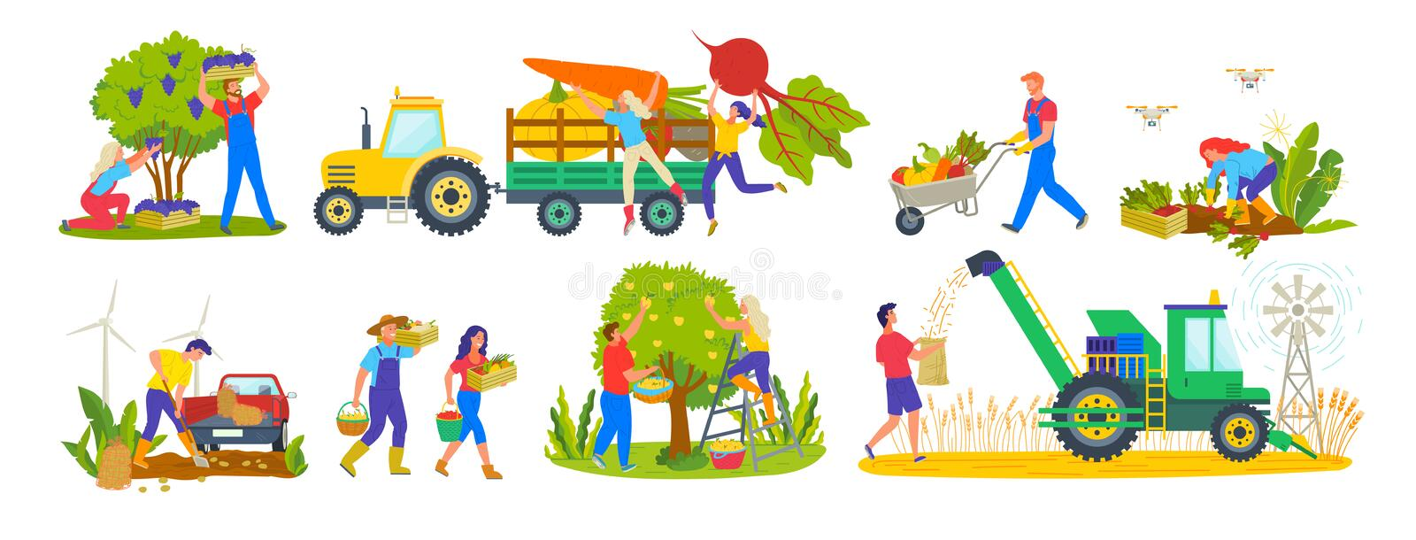 Harvesting Season Tractor and Agriculture Workers. Husbandry and harvest vector, tractor and products, garden farme, carrots and beetroots pumpkin and veggies vector illustration