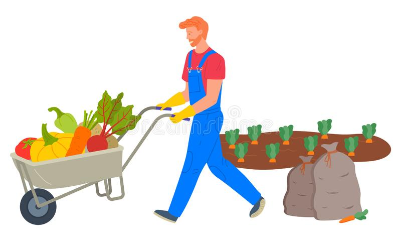 Farmer Pushing Cart Loaded with Vegetables Vector. Harvesting season vector, man transporting products from plantation of carrots. Bag and pumpkin, beetroots and royalty free illustration