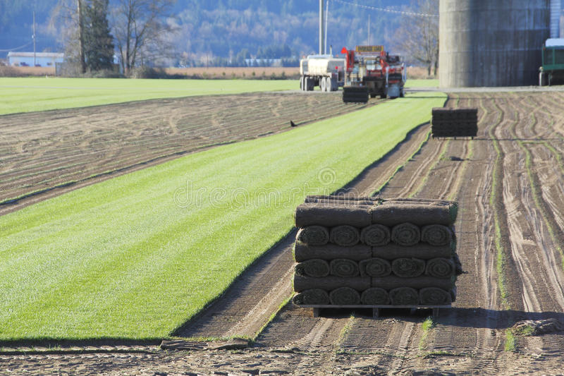 Harvesting Sod or Turf. Carpets of turf or grass is stripped away to be sold commercially stock photos